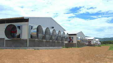 Multifan Galvanized Cone Fan Poultry L