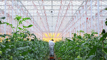 Multifan Horizontal Circulation Fan Greenhouse L