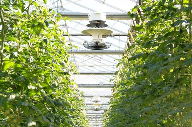 Greenhouse V-FloFan (10)