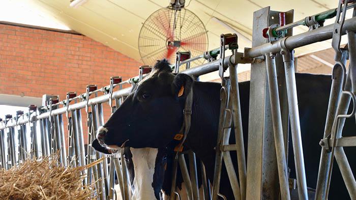 Multifan Basket Fan Dairy 1 L