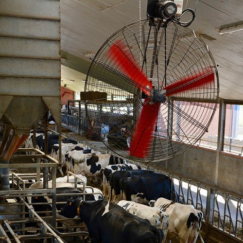 Multifan Basket Fan Dairy 3 R