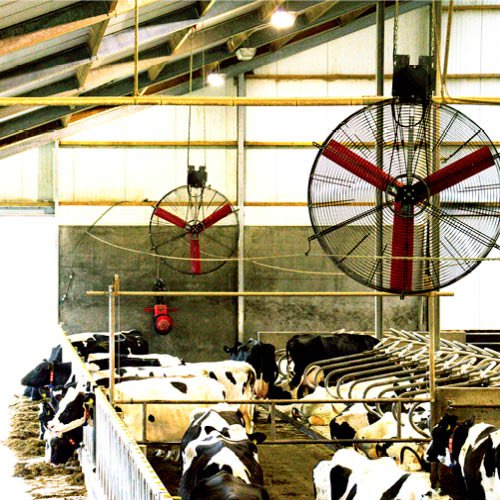Multifan Basket Fan Dairy cows R