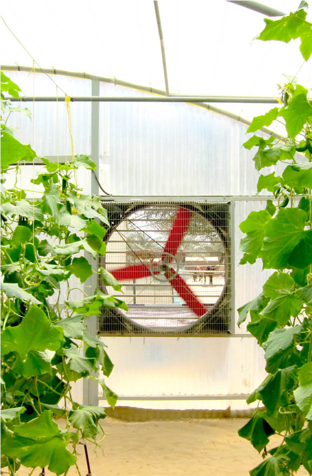 Multifan Galvanized Box Fan Greenhouse P