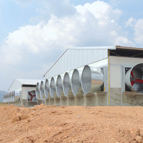 Multifan Galvanized Cone Fan Poultry R