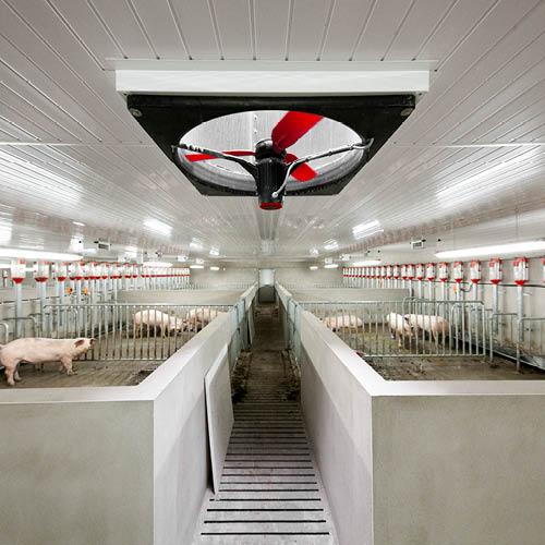 多風扇面板風扇豬