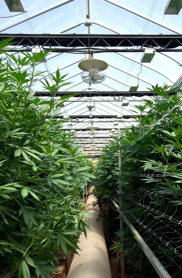 Multifan V-FloFan Medicinal Cannabis P